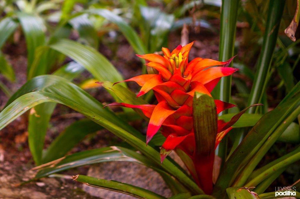 rio de janeiro photography tour - botanical gardens