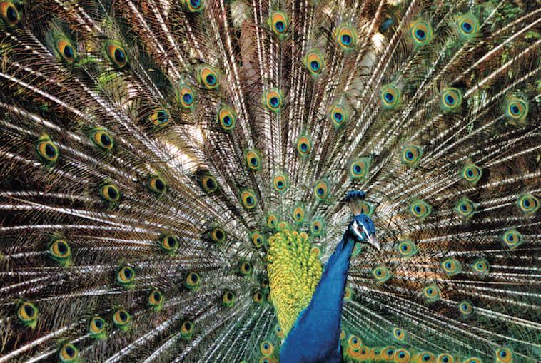 Parque das Aves | Bird Park