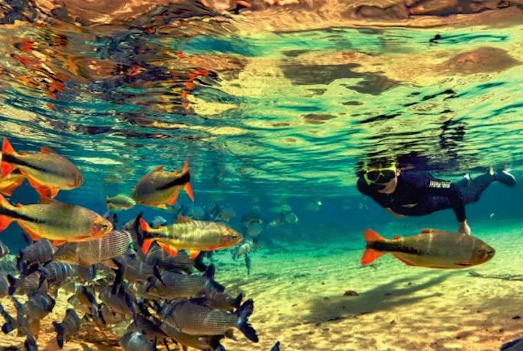 Bonito Snorkeling